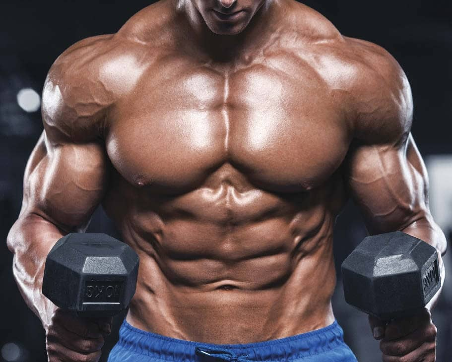 muscle mass and bulked body