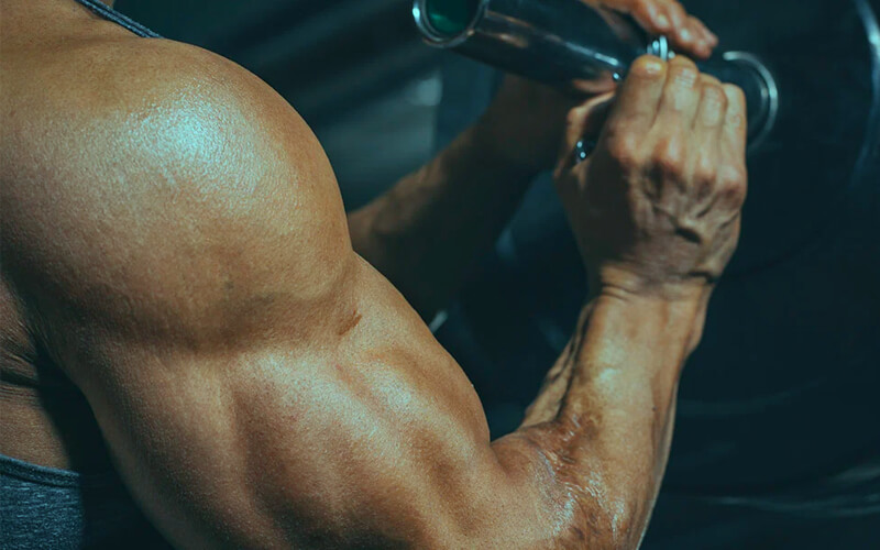 Steroids and muscle growth