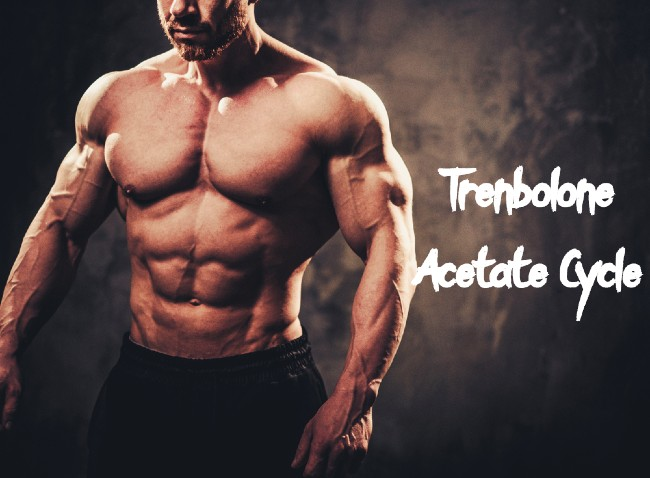 Trenbolone-Acetate-Cycle